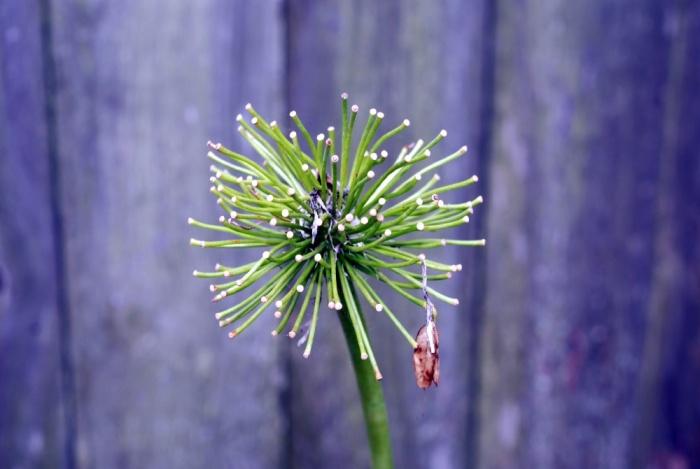 Spent Bloom