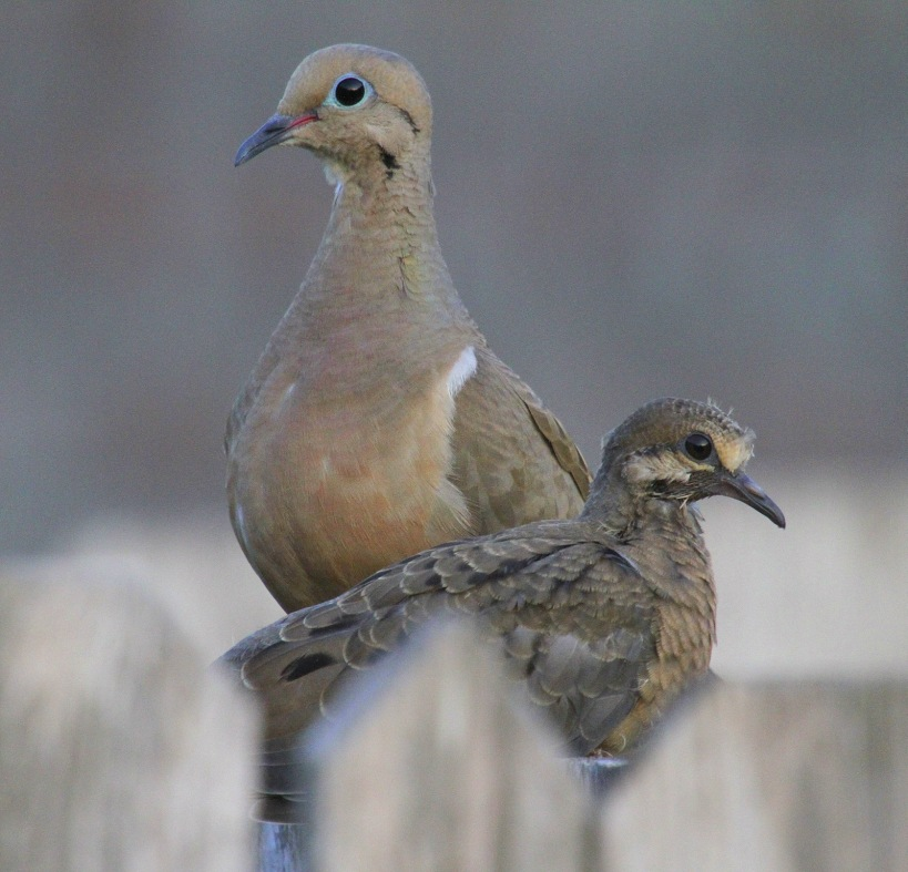 Momma And  A Fledgling