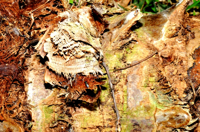 Bark of a Dead Palm Tree