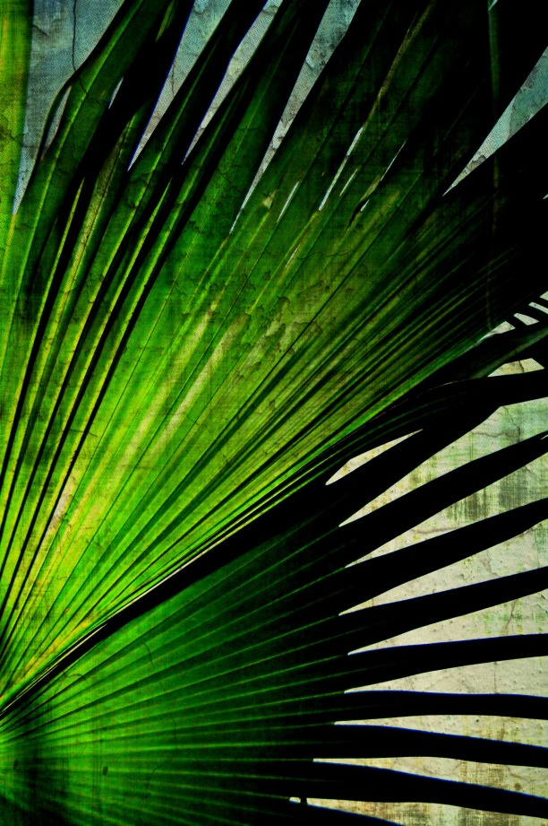Palm Frond Against A Wall