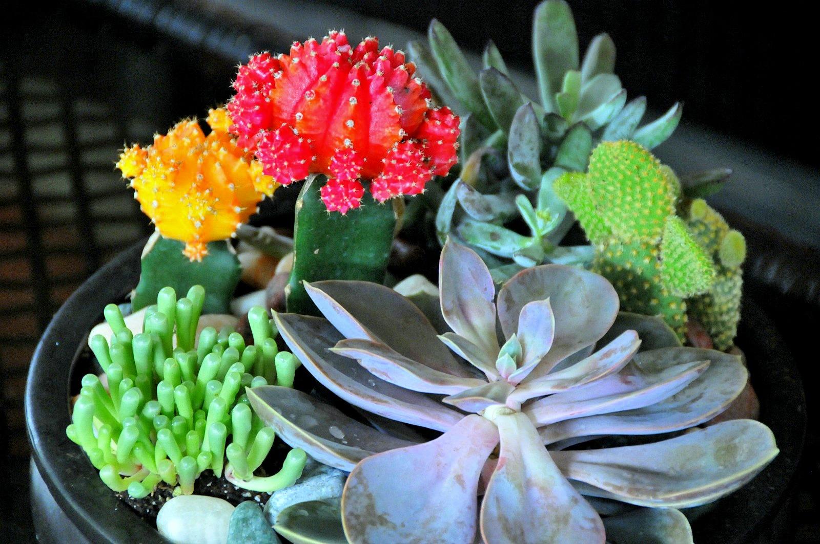 The Cactus Garden That Was She Kept A Parrot