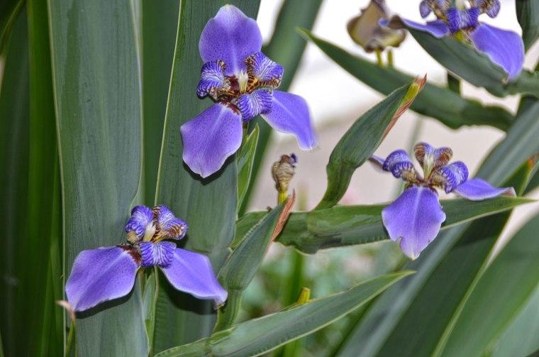 Iris-Group-1250