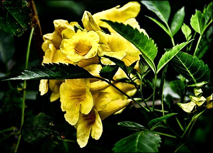Yellow-Flower-1000