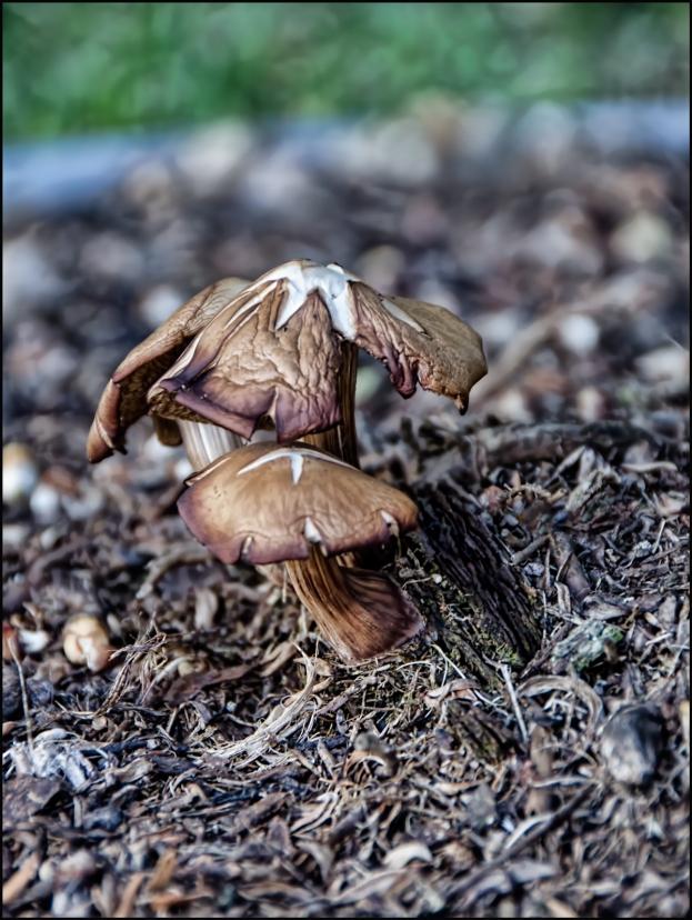 Mushrooms-Fall-1200