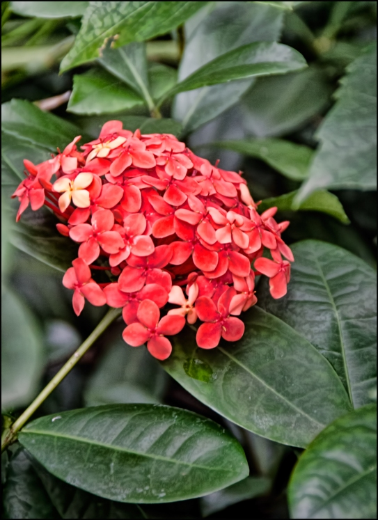 Flower-orange-hidden-1200