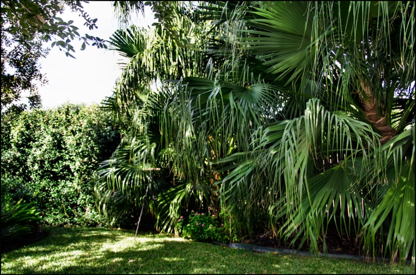 Palms-right-side-1200