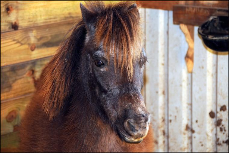 Pony-1200