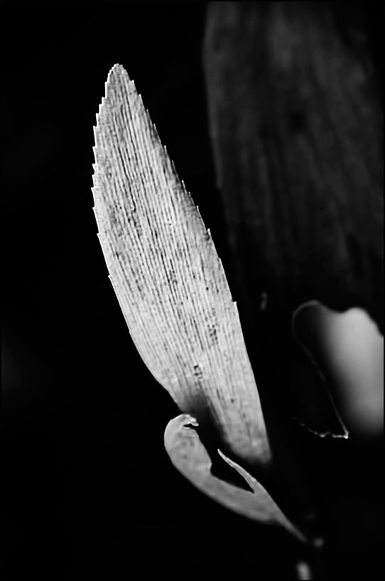 Cardboard-Leaf-BW