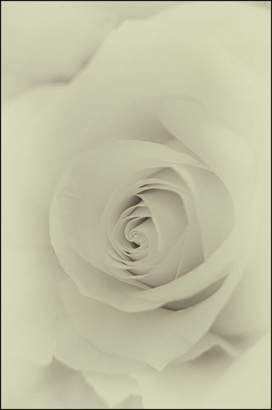Rose-for-Fuzzy
