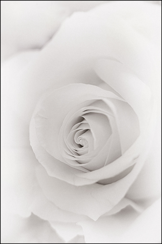 Rose-II-for-Fuzzy-White