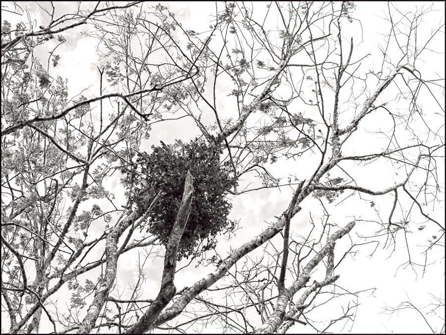 Tree-BW