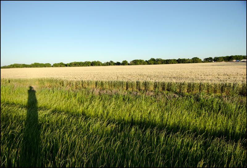 Field-color