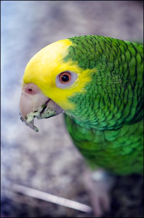 Pasta-on-Beak
