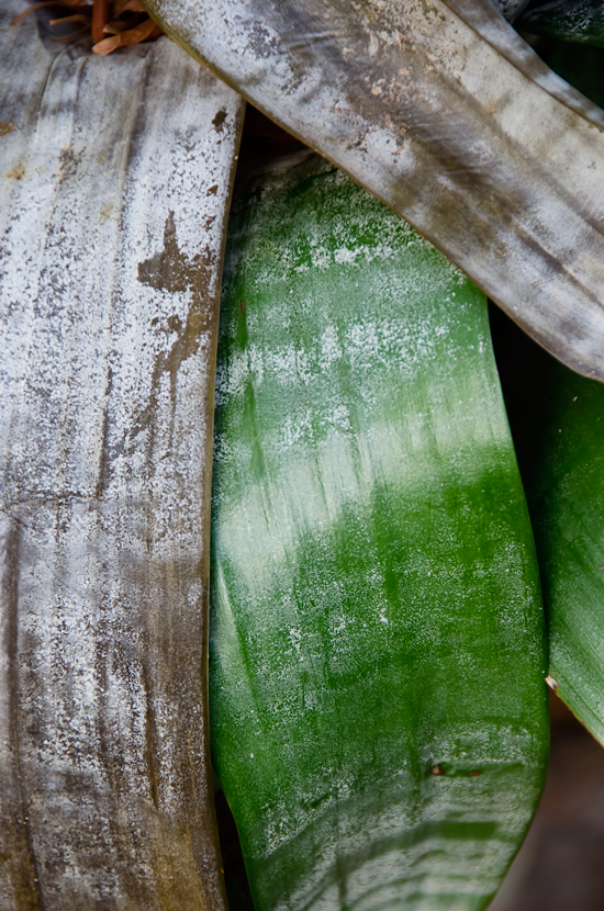 Bromeliad-Leaves-for-abstract