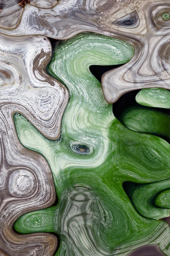 Bromeliad-Leaves
