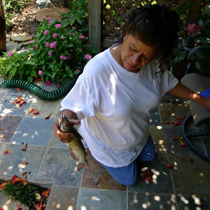 irma-and-the-catfish