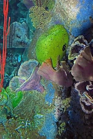 Coral-II