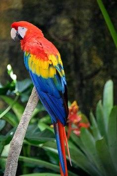 Parrot-hybrid