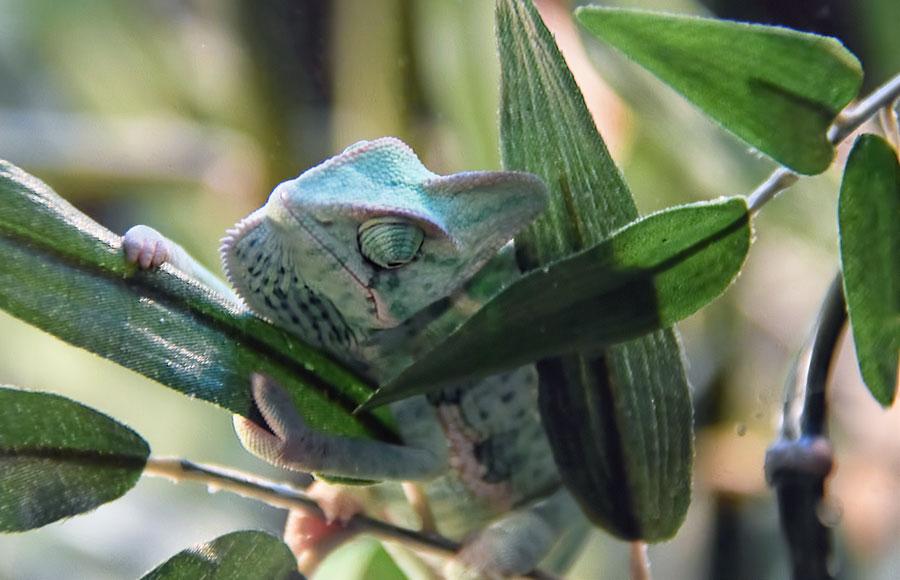 Silk-Flower-hiding