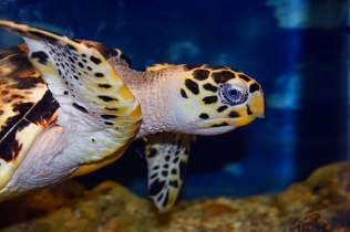 Tortoise-II