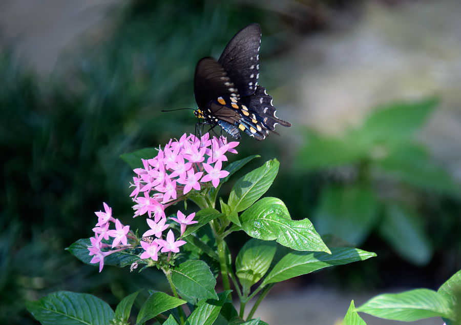 Butterfly-in-garden-Nov.