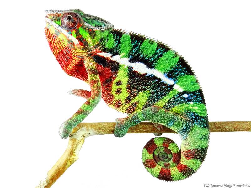 Chameleon-II